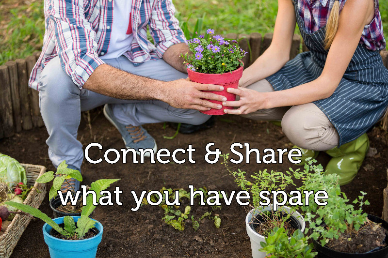 Connect-Share